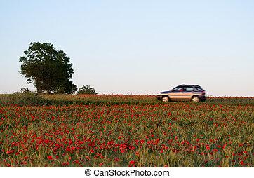 καλοκαίρι , θολός , κόκκινο , τοπίο , αυτοκίνητο