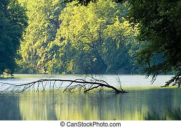 καλοκαίρι , λίμνη , πρωί