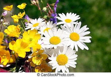 καλοκαίρι , λουλούδι
