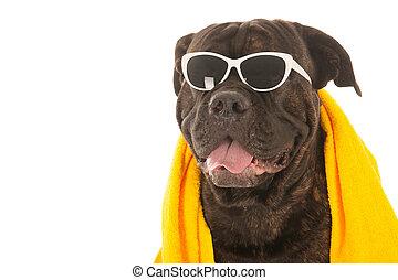 καλοκαίρι , σκύλοs