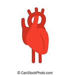 καρδιά , illustration., σύμβολο. , μικροβιοφορέας , ανθρώπινος , κόκκινο