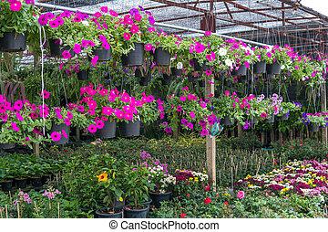 κατάστημα , λουλούδι
