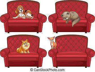 κατοικίδιο ζώο , καναπέs