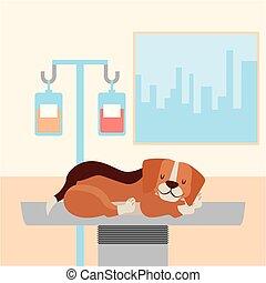 κατοικίδιο ζώο , κτηνιατρικός