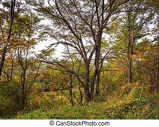 κατωφέρεια , σκεπαστός , φύλλωμα , δέντρα , δάσοs , φθινόπωρο