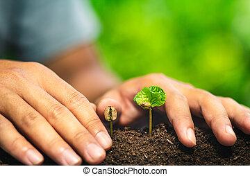 καφέs , νεαρό φυτό , μέσα , φύση , εργοστάσιο , ένα , δέντρο , γενική ιδέα , χέρι
