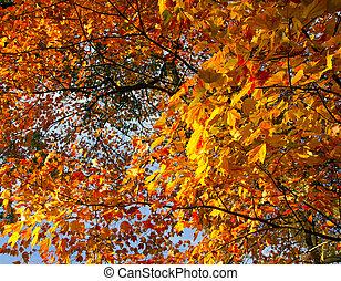 κεντρικός , γραφικός , φύλλα , πάρκο , ευφυής , πέφτω , nyc