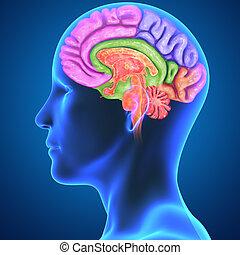 κομμάτια , εγκέφαλοs , σώμα