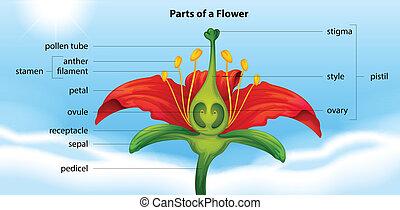 κομμάτια , λουλούδι