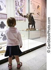 κορίτσι , μικρός , κοιτάζω , musem, μαϊμού