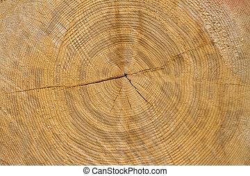 κορμός δέντρου