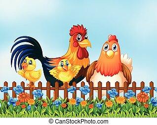 κοτόπουλο , κήπος , οικογένεια