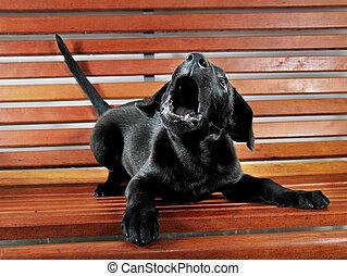 κουτάβι , σκυλί ράτσας λαμπραντόρ θηραματοφόρος κυνηγετικός σκύλος