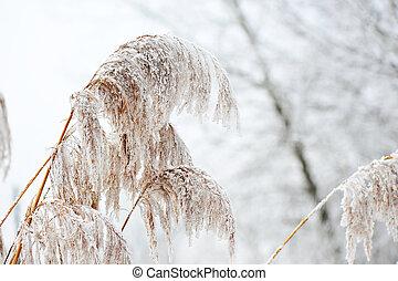 κρύο , χειμώναs