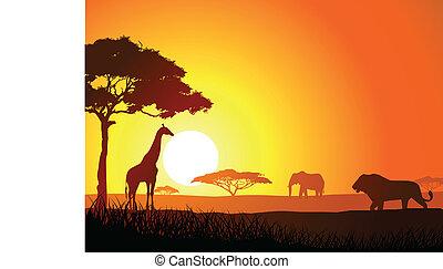 κυνηγετική εκδρομή εν αφρική , φόντο