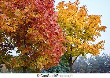 κόκκινο , leaves., δέντρο , φθινόπωρο , βελανιδιά