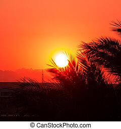 κόκκινο , sunset.