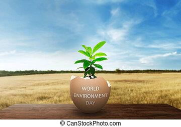 κόσμοs , περιβάλλον , ημέρα , γενική ιδέα