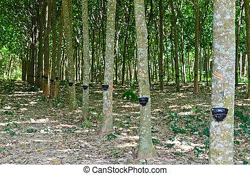 λάστιχο , κόμμι , ελαφρός κτύπος , δέντρο