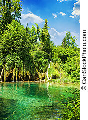 λίμνη , μέσα , δάσοs