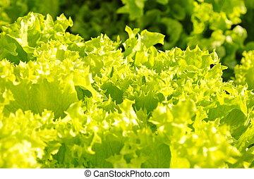 λαχανικά , και , απάτη