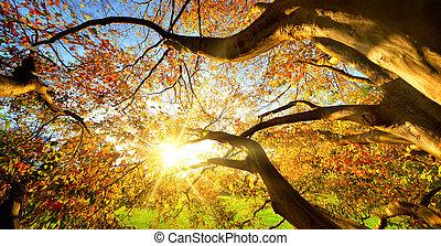 λιακάδα , έχουν ειδωθεί , δέντρο , διαμέσου , μεγάλος , φθινόπωρο