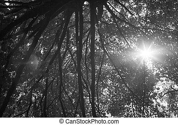 λιακάδα , αλλάζω κατεύθυνση , διαμέσου , ακτίνα , foliage.