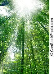 λιακάδα , δάσοs