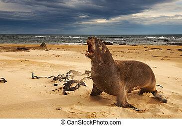 λιοντάρι , θάλασσα