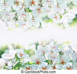 λουλούδια , από , ο , κερασέα άνθος , επάνω , ένα , άνοιξη , ημέρα