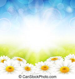 λουλούδια , επάνω , ο , καλοκαίρι , φόντο