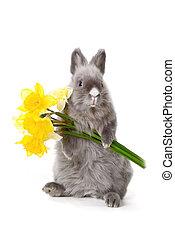 λουλούδια , λαγουδάκι , κίτρινο