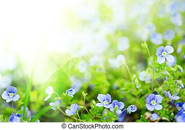 λουλούδια , μη με λησμονεί