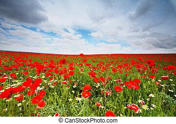 λουλούδια , πεδίο