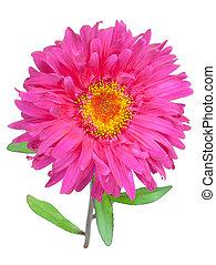 λουλούδια , φόντο , απομονωμένος , αριστερός αγαθός