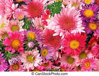λουλούδια , φόντο
