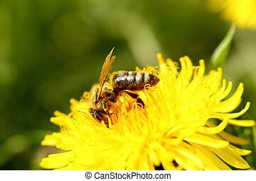 λουλούδι , εργαζόμενος , μέλισσα