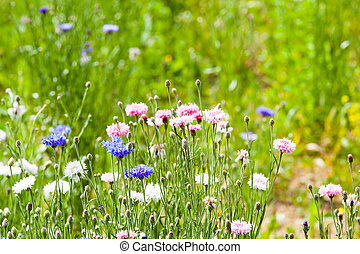 λουλούδι , λιβάδι