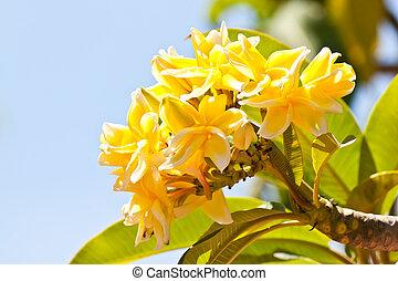 λουλούδι , με , γαλάζιος ουρανός