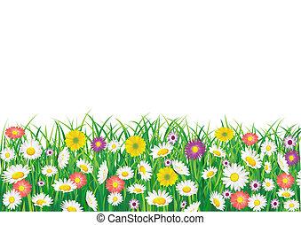 λουλούδι , πεδίο