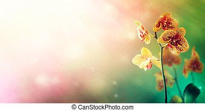 λουλούδι , φόντο , ορχιδέα