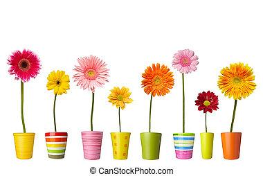 λουλούδι , φύση , κήπος , βοτανική , μαργαρίτα , ακμάζω , δοχείο