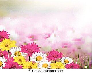 λουλούδι , όμορφος