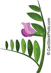 λουλούδι , clipart , χρώμα , βικία , εικόνα , μικροβιοφορέας , ή