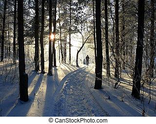 μέσα , χειμώναs , πάρκο