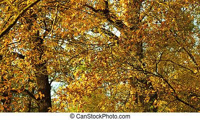 μαγεία , πάνω , δέντρα , φθινόπωρο , sunlight., κλείνω