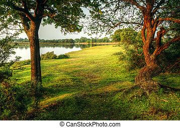 μαγικός , φαντασία , ρυθμός , δάσοs , σκηνή , με , λίμνη , κατά την διάρκεια , ηλιοβασίλεμα