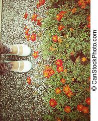 μαργαρίτα , λουλούδια , με , παπούτσια