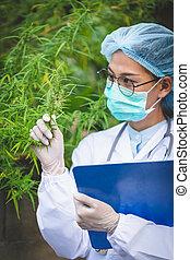 μαριχουάνα , analizing, γιατρός , γενική ιδέα , κάνναβις ,...