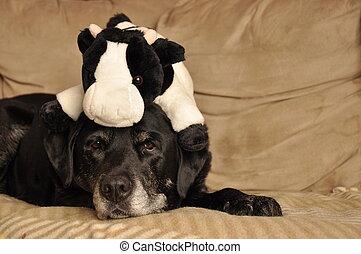 μαύρο σκυλί ράτσας λαμπραντόρ , ανακτών , με , παιχνίδι